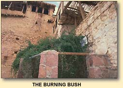 Largest Was Bush Where The Located Burning paltry